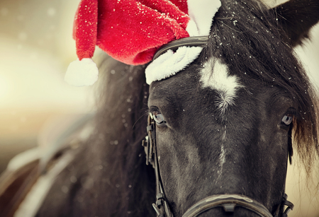Portrait of a black horse in a a red Santa hat