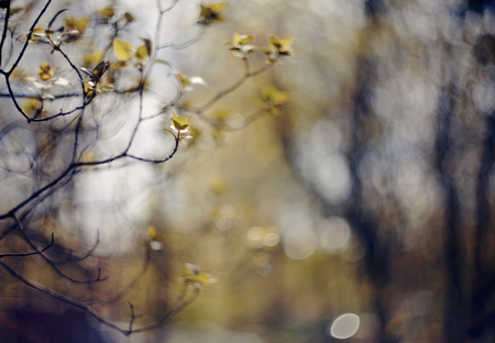 Spring branches of a bush of a lilac. Standard-Bild