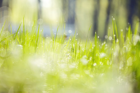 Abstract Blurred background from a wet green grass in dew drops Standard-Bild