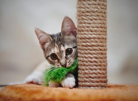 Junge gestreifte Hauskatze spielt mit einem grünen Spielzeug.