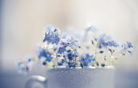 Bouquet of blue forget-me-nots close up in a cup at a window, are lit with the sun. Forget-me-nots and Bokeh.