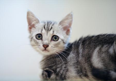 Portrait of a gray striped domestic kitten Stock fotó
