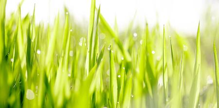 Hintergrund mit grünem nassem Gras mit Tautropfen
