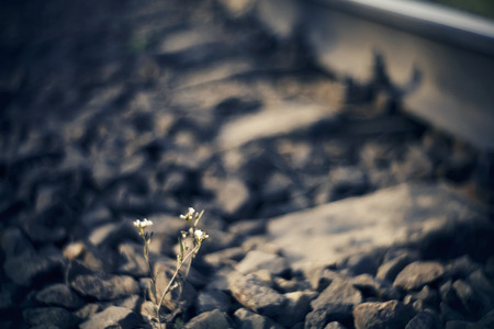 Blurred background with railway rails and growing flowers on the tracks.