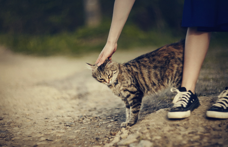 Communication on the street with a gray striped stray cat.