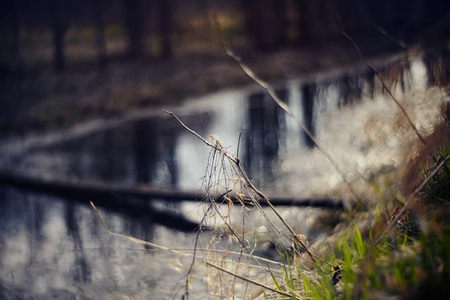 Blurred background with river and grass in the foreground.