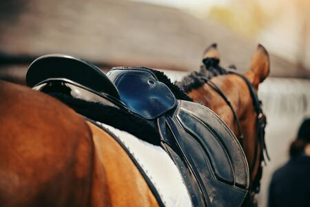 Saddle with stirrups on a back of a horse. Equestrian sport. 版權商用圖片