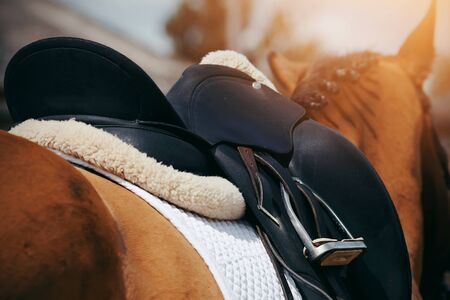 Saddle with stirrups on a back of a horse. Equestrian sport. Stock Photo