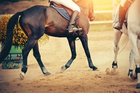 Equestrian sport. The leg of the rider in the stirrup, riding on a red horse. Dressage of horses in the arena. Standard-Bild