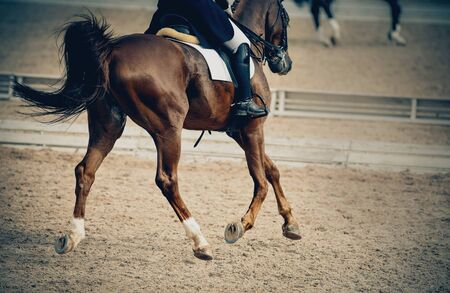 Equestrian sport. Dressage of horses in the arena. The leg of the rider in the stirrup, riding on a horse.