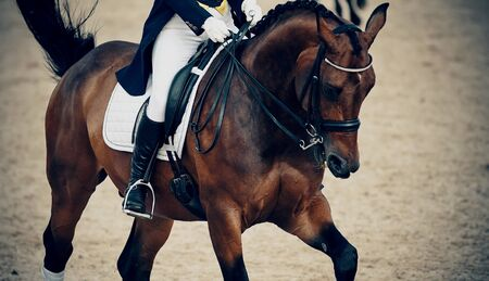 Equestrian sport.The leg of the rider in the stirrup, riding on a brown horse. Dressage of horses in the arena.
