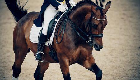 Pferdesport. Das Bein des Reiters im Steigbügel, der auf einem braunen Pferd reitet. Dressurpferde in der Arena.