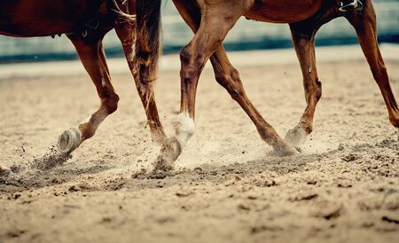 Dust under the horses hooves. Legs of a galloping horses.