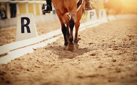 Dust under the horse's hooves. Legs of a sports horse galloping in the arena.