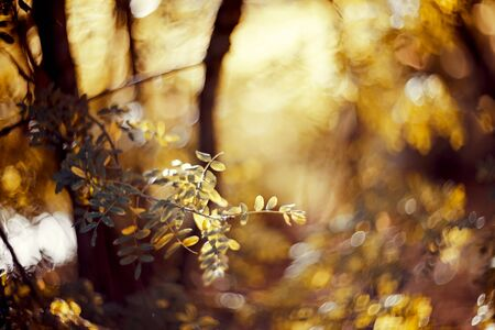 Autumn blurred background with branches with yellow leaves. Golden autumn. Archivio Fotografico - 131057829