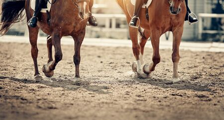 Dust under the hooves of a horses. Legs of two sports horses galloping around the arena.