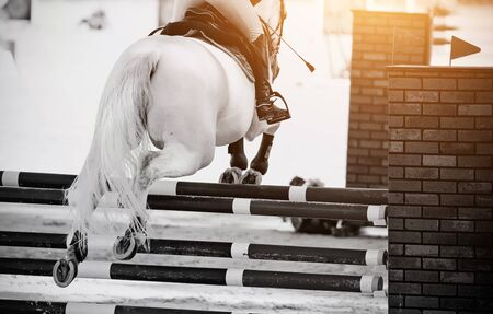 The gray horse overcomes an obstacle. Equestrian sport, jumping. Archivio Fotografico - 131058003