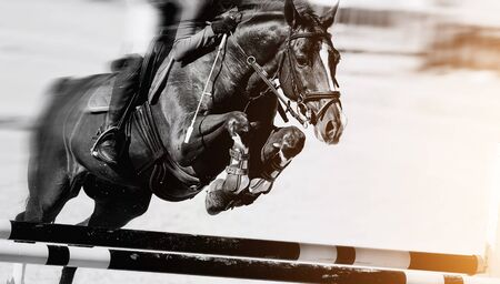 The horse overcomes an obstacle. Equestrian sport, jumping.