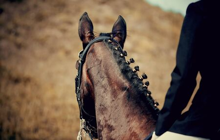 Pigtails on neck sports brown horse. Dressage of horses. Equestrian sport. Archivio Fotografico - 131058004
