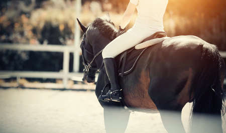 Equestrian sport The leg of the rider in the stirrup, riding on a brown horse. Dressage of horses in the arena. Portrait sports brown stallion in the bridle.
