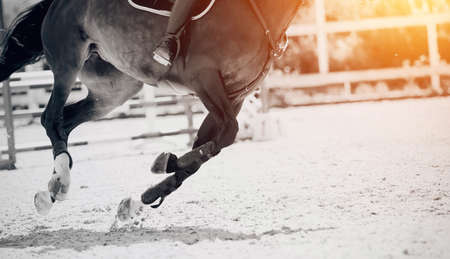 Equestrian sport. Galloping horse. Legs of a galloping horse close-up. Dressage of horses in the arena. The leg of the rider in the stirrup, riding on a horse. Overcome obstacles. Jumping competition.