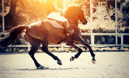 Equestrian sport. Galloping horse. Dressage of horses in the arena. The leg of the rider in the stirrup, riding on a horse. Overcome obstacles. Jumping competition.