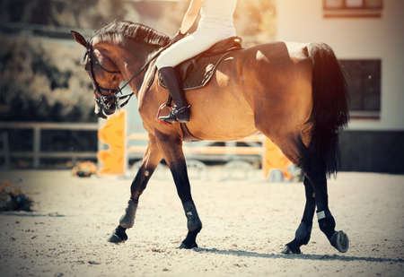 Equestrian sport. Dressage of horses in the arena. The leg of the rider in the stirrup, riding on a horse. Jumping competition.