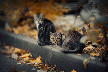 Two homeless street cats sit on the curb in the fall.