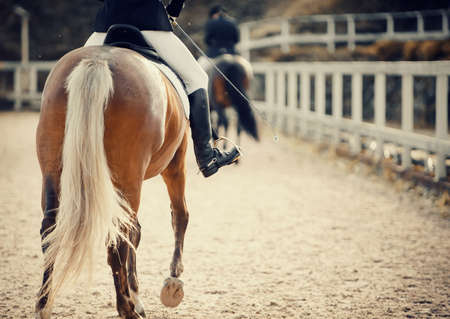 Equestrian sport The leg of the rider in the stirrup, riding on a palomino horse. 免版税图像
