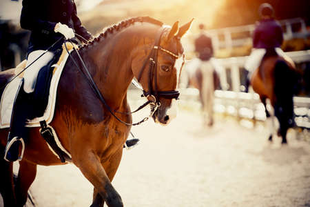 Equestrian sport. Portrait sports red stallion with a white groove on his forehead in the double bridle. The leg of the rider in the stirrup, riding on a red horse. Dressage of the bay horse in the arena. Horseback riding. 免版税图像