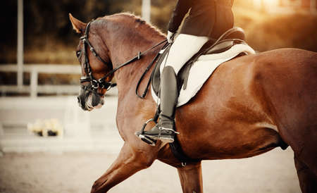 Equestrian sport.The leg of the rider in the stirrup, riding on a red horse. Dressage of horse in the arena. Dressage horse galloping with rider. Horseback riding.