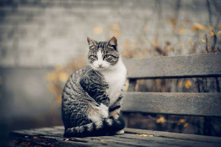 Homeless street cat is sitting on a bench in the fall. A tabby cat with yellow eyes on a bench against a gray brick wall.