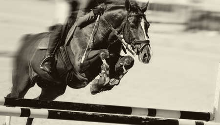 The horse overcomes an obstacle. Equestrian sport, jumping. Overcome obstacles. Dressage of horses in the arena. Jumping competition. Horseback riding. Standard-Bild