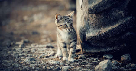 A small striped stray kitten near the big wheel of a tractor.