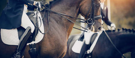 Equestrian sport. Portrait sports stallion in the double bridle. The legs of the rider in the stirrup, riding on a brown horse. Dressage of horses in the arena. Horseback riding.