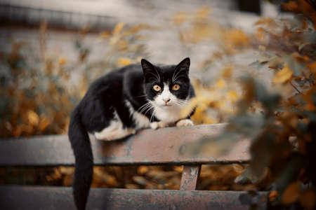 A black scared cat with yellow eyes is sitting on a bench. Standard-Bild
