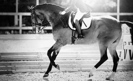 Equestrian sport. The leg of the rider in the stirrup, riding on a red horse. Dressage of the bay horse in the arena. Horseback riding. Not color image.