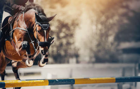 The bay horse overcomes an obstacle. Equestrian sport, jumping. Overcome obstacles. Dressage of horses in the arena. Jumping competition. Horseback riding.