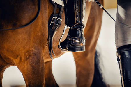 Equestrian sport. The rider gets on the horse. The leg of the rider in the stirrup. Stirrup close-up. Dressage of horses in the arena. Horseback riding.