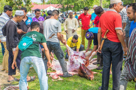 Muadzam Shah, Malaysia - SEPTEMBER 1st , 2017: Malaysian Muslim worked together skinning beef before distribute to the poor and community during Eid Al Adha ,the Feast of Sacrifice or Qurban Editorial