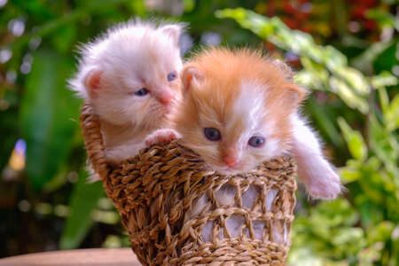 Cute red and cream little kittens sitting in a basket surrounded by green outdoors Stock Photo