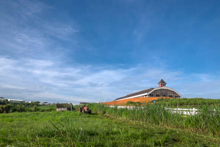 Muadzam Shah, Malaysia – Disember 6th  , 2017 :  Tractor mowing pasture for silage at The First Dairy Farm Sdn Bhd, Muadzam Shah, Pahang, Malaysia.