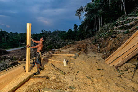 Muadzam Shah, Malaysia - 8 September 2018 : Unidentified timber workers raised the already cut timber near the forest Editorial