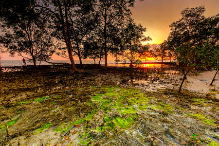 A scenery of sunset with  a beautiful mossy  at Bukit Batu beach, Senggarang, Malaysia. Soft focus during long exposure shot.