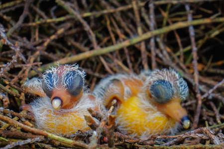 New hatch baby bird sleeping in nest in selective focus