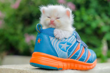 Little kittens playing in shoes
