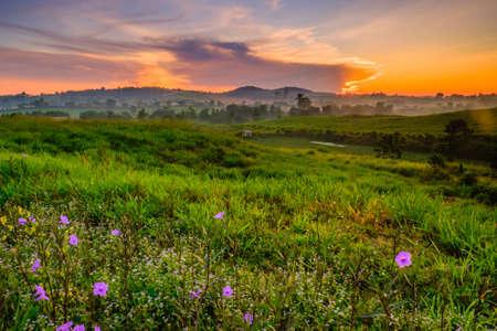 Maravilloso paisaje del amanecer de la granja lechera con flores florecientes de petunia mexicana (Ruellia brittoniana), paisaje del amanecer, escena colorida y granja de belleza. Foto de archivo