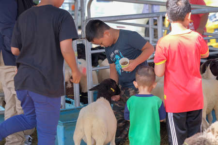 Muadzam Shah, Malaysia- September 27th, 2019 : Childrens feeds the sheep on a farm at Agro Fest 2019 in Muadzam Shah