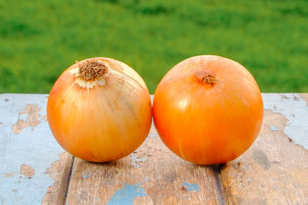 Fresh onion on old wood with green summer outdoor blurred in the background. Imagens