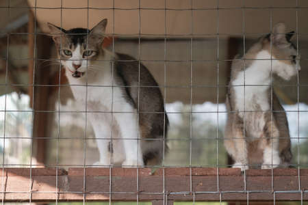Cats  resting  in a cage . Selective focus